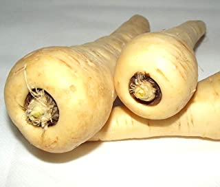 Parsnip Hollow Crown Seeds Heirloom Non-GMO Root Vegetable C304 (400 Seeds)