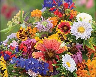 7c00dfc399e9 David s Garden Seeds Flower Butterfly Hummingbird Mix SS3062 (Multi) 500  Non-GMO