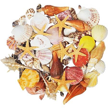 Jangostor 100 PCS Coquillages Mixte Océan Plage Coquillages,Différentes Tailles Coquillages Colorés Naturels Étoile de mer Parfait pour Les remplisseurs de Vase