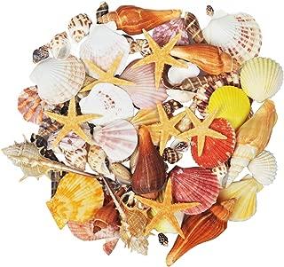 Jangostor 100PCS Sea Shells 15 Kinds Mixed Ocean Beach Seashells-Natural Colorful Seashells Starfish Perfect for Vase Fillers (Carton)