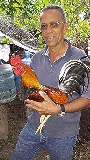 Manual de alimentacion del gallo de pelea: aprenda como alimentar un gallo de pelea (El gallo fino de pelea nº 47)