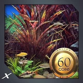 Funky Fish Aquarium : view the colourful aquarium on screen