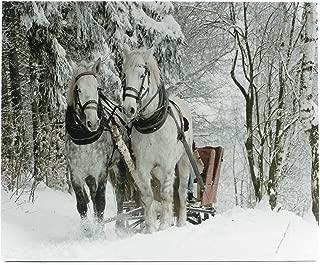 Oak Street Snowy Horse Drawn Sleigh LED Art 8