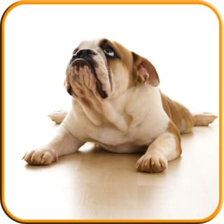 Dog Training Master