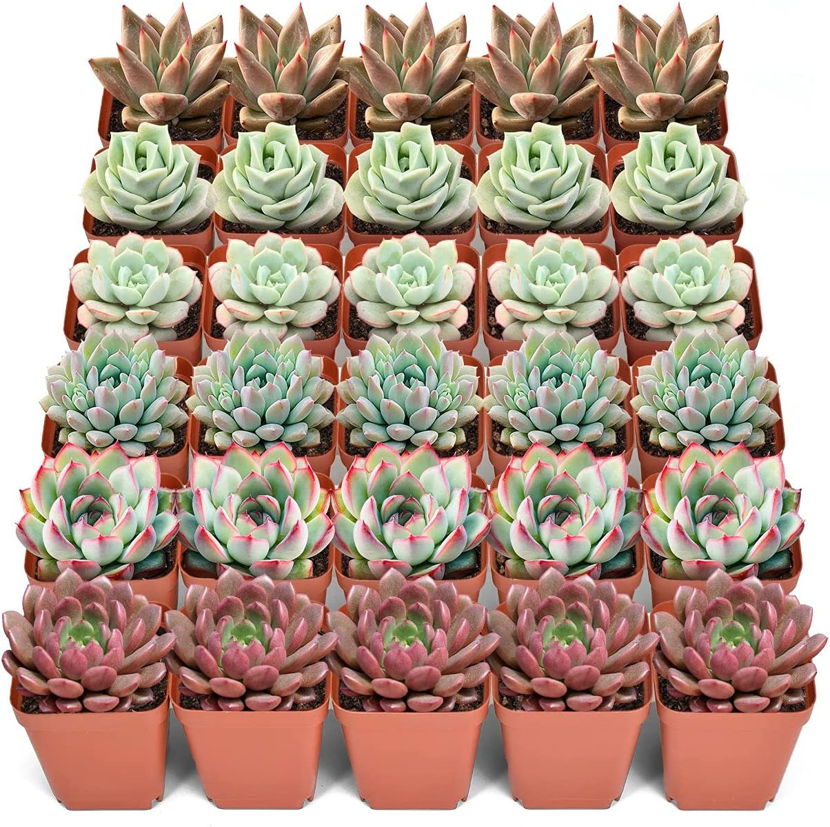 30 Assorted Live Succulent Plants half Clearance SALE! Limited time! of Mini 6 2