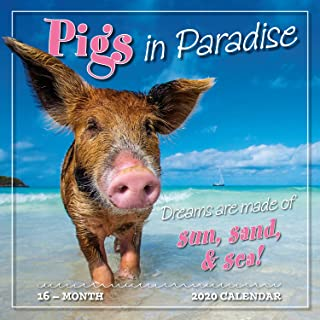 Pigs in Paradise 2020 Wall Calendar: by Sellers Publishing