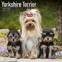 Yorkshire Terrier Calendar - Dog Breed Calendars - 2018 - 2019 Wall Calendars - 16 Month by Avonside