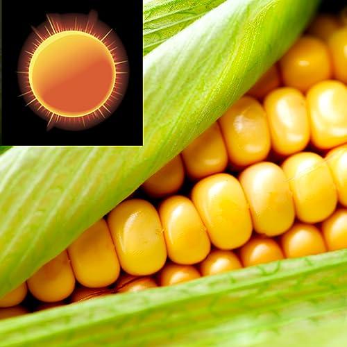 Widget de reloj meteorológico de maíz