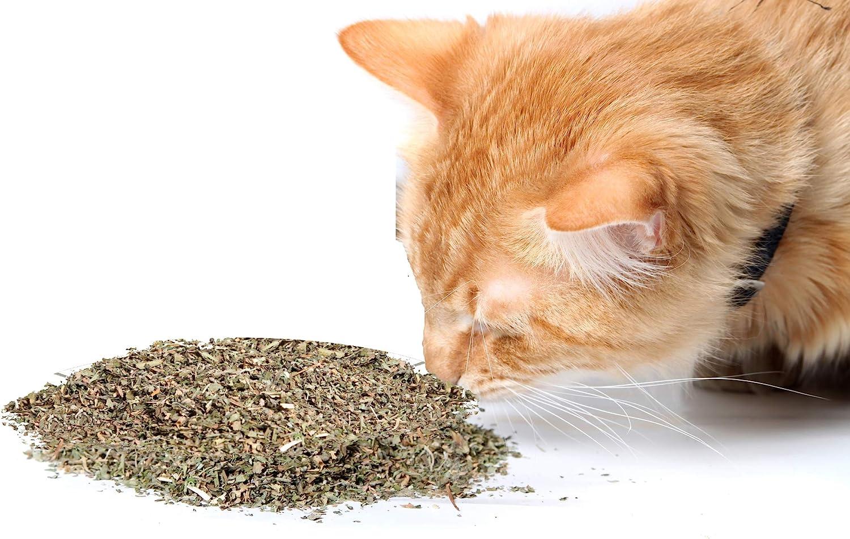 Cat Ranking TOP18 Weed Organic Catnip has Maximum Nip Popular standard Potency Blend Th Premium