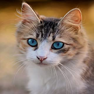Cats - HD Wallpapers