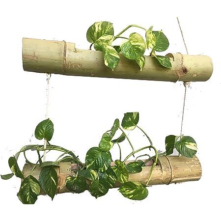 Naoe Wood Bamboo 2 Steps Hanging Planter (Brown)
