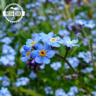 Best forget me not flower Reviews