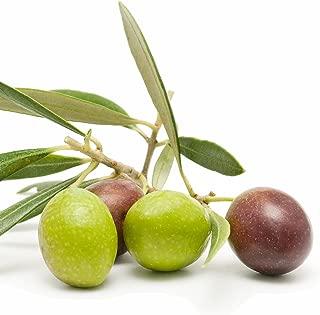 Arbequina Olive Tree Olea Europaea Live Plant