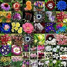 Seeds Package: 49#Rosa_100Pcs : Mixed Style Flower Seeds Desert Rose Home Garden Bonsai Seeds Decor
