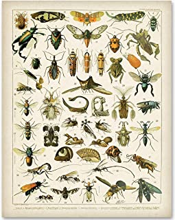 Insects - 11x14 Unframed Art Print - Makes a Great Home Decor Under $15