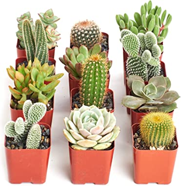 Shop Succulents | Cactus & Succulent Live Plants, Hand Selected Variety Pack of Cacti and Mini Succulents | Collection of 12
