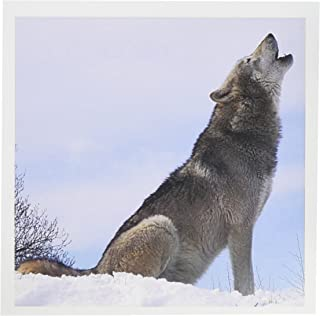 3dRose The Wolf Howling - Greeting Cards, 6 x 6 inches, set of 12 (gc_62431_2)