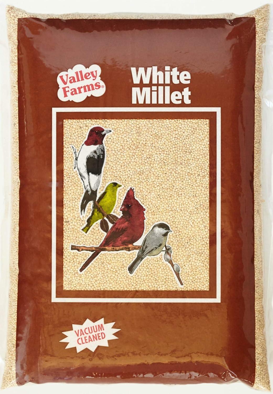 Valley Farms White Millet - Wild Baltimore Mall Charlotte Mall Food Bird Watcher Secret