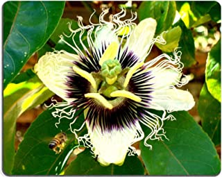 MSD Mousepad Carpenter Bee Xylocopa frontalis pollen a flower of Passion fruit Passiflora edulis Natural Rubber Material Image 3453153619