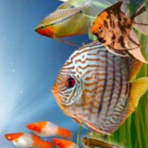 Aquarium Wien