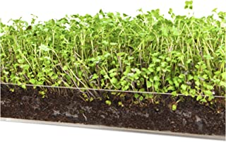 """Microgreen Salad 3 Pack Refill KIT – Pre-Measured Soil + Seed, USE with Window Garden Multi-Use 15"""" x 6"""" Planter Tray. Multi USE Tray is NOT Included."""