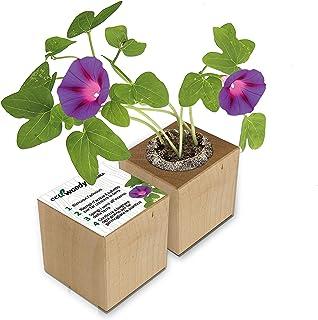 Eco-Woody | Regalo ecologico e sostenibile | Cubo di legno magnetico con semi di Ipomea | Kit per la coltivazione facile d...