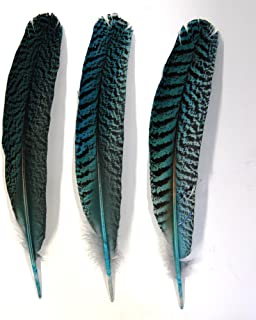 1 Pc Dyed Peacock Quill 10-14
