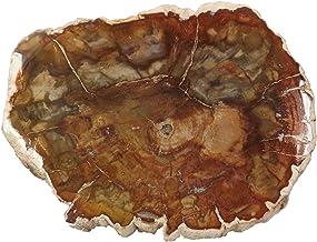 """EAGems Petrified Wood Slab, Polished Fossilized Stone Tree Branch Specimen from Madagascar, Small Slice 2-3"""" Size, Unique ..."""