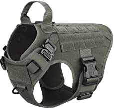 ray allen dog equipment