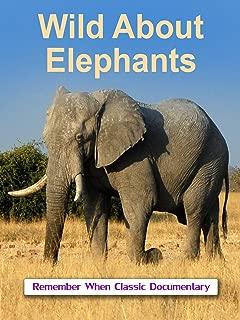Wild About - Elephants