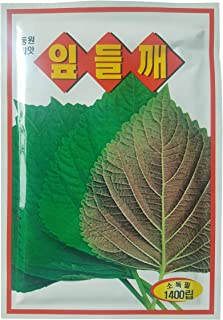 korean perilla plants for sale