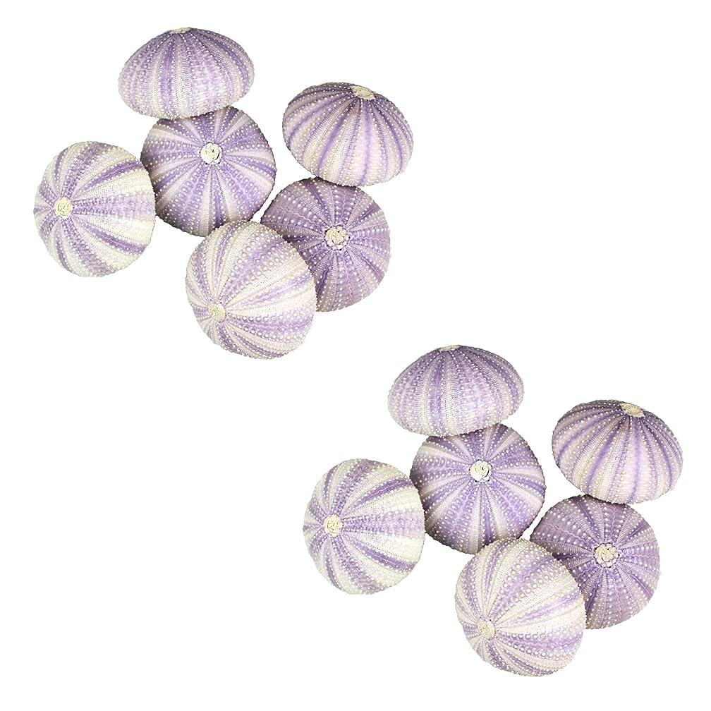 NW Wholesaler - Natural Sea Urchin Shells for Home Decor, Beach Decor, Terrariums, Air Plants, Arts & Crafts (Bundle of 12, Purple)
