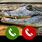 Fake call from Alligator Reptil