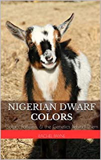 nigerian dwarf colors