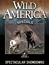 Wild America: Spectacular Showdowns