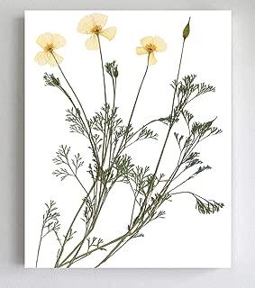 California Poppy Botanical Print - Unframed Fine Art Giclee - 5X7, 8X10, 11X14 and 16X20 Sizes
