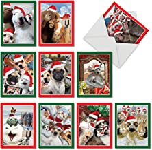 Holiday Animal Selfie - 10 Boxed Christmas Cards with Envelopes (4 x 5.12 Inch) - Funny Assorted Greeting Cards for Xmas M2373XSG