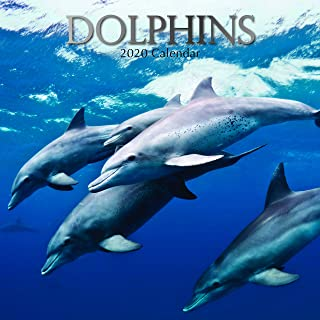 Best dolphins calendar 2018 Reviews