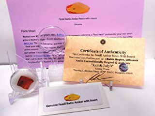 Genuine Fossil Baltic Amber Resin with Insect Inclusion From Lithuania with FREE Magnifying Glass, Acrylic Display Stand, Fact Sheet & COA Bundle.