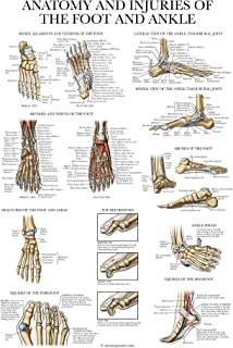 Sponsored Ad - Laminated Anatomy and Injuries of The Foot and Ankle Poster - Anatomical Chart of Foot and Ankle Joint - 18...