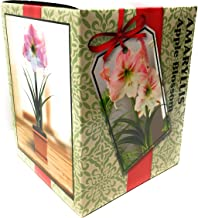 Best amaryllis bulb kits gifts Reviews