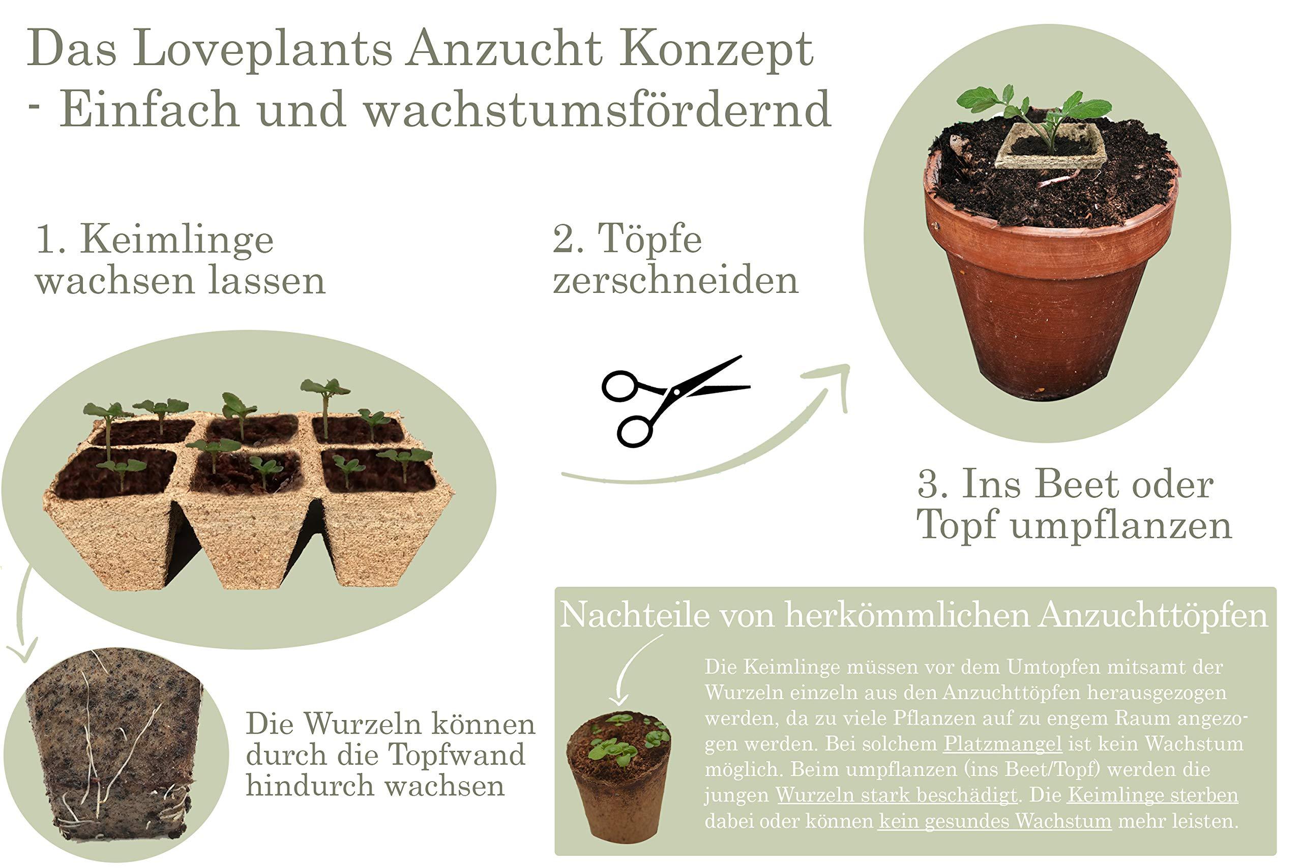 regalo Set de cultivo – Bio té hierbas Juego de plantas con 3 ...