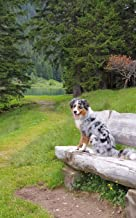 "Notebook: Tricolor Border Collie On A Seat In The Swiss Alps 5"" x 8"" 150 Ruled Pages"