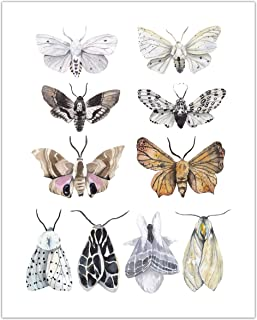 Watercolor Moths Art Print - Vintage Nature Wall Art - Kitchen Wall Decor - UNFRAMED - 8x10