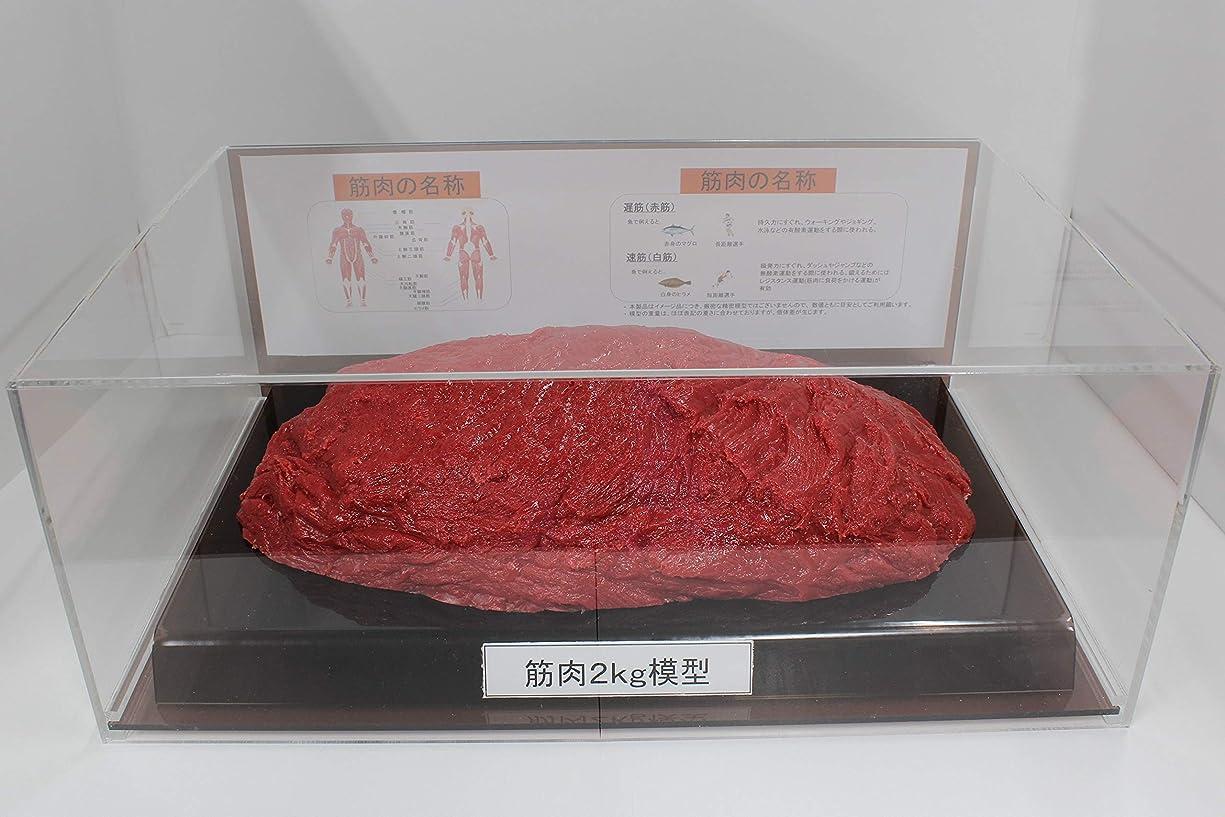 セクション広まった不安筋肉模型 フィギアケース入 2kg ダイエット 健康 肥満 トレーニング フードモデル 食品サンプル