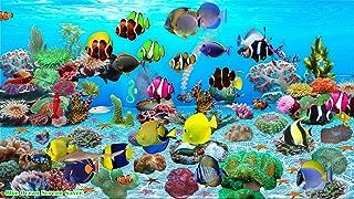 Blue Ocean Screen Saver [Download]