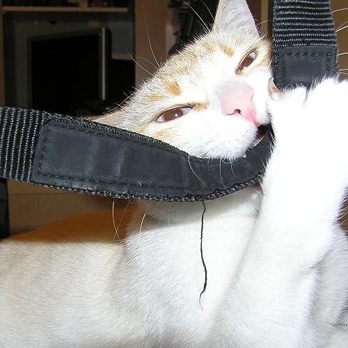 Gato Ronroneando (Versión Extendida)