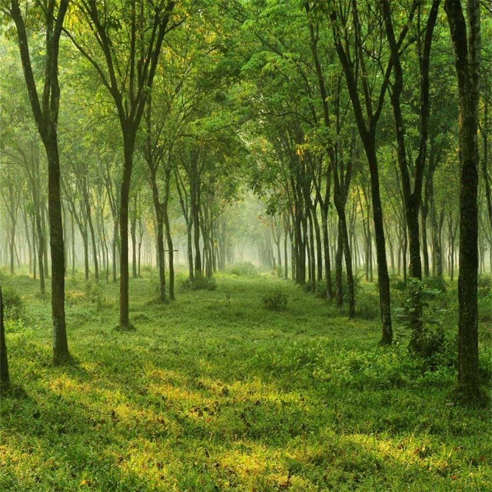 Green Grass And Trees Forest Simple Background Trees Path Hd Wallpaper Wallpaper Flare