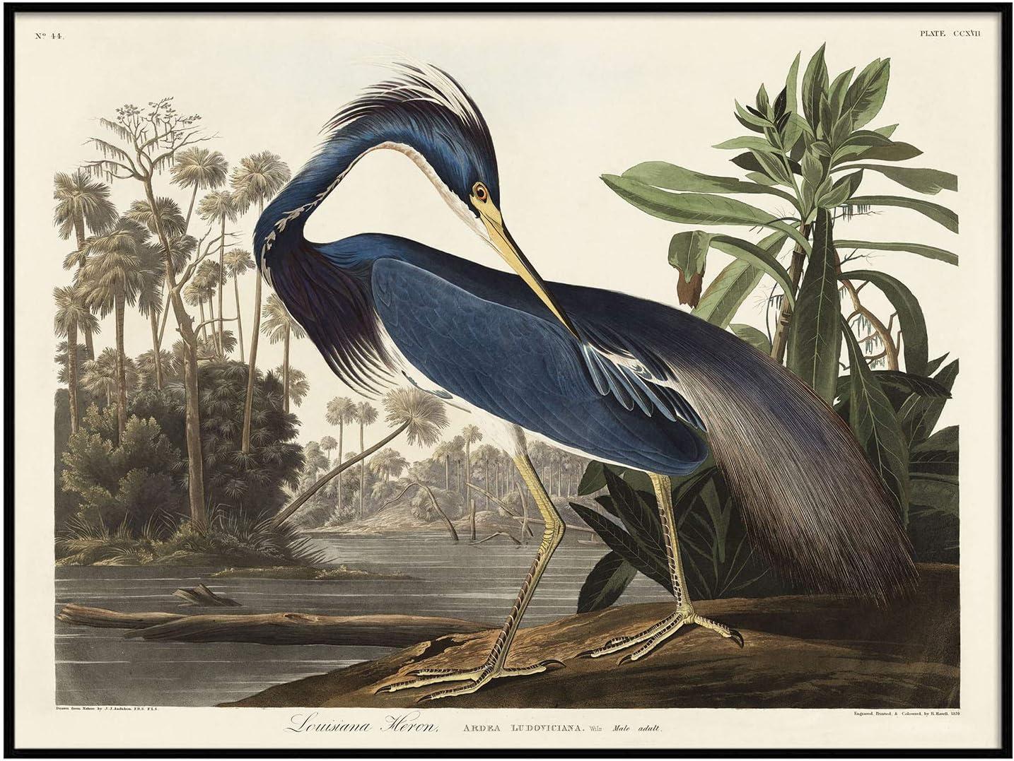 Detroit Mall Louisiana Heron Print Antique Bird Ranking TOP13 Drawing Po Painting Vintage