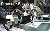 Dinosaur Fossils Jigsaw Puzzles
